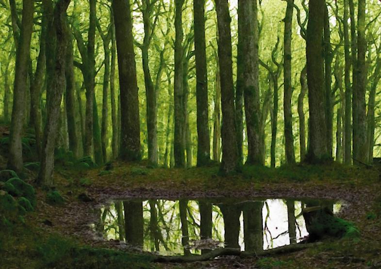 Skogstjärn_inst